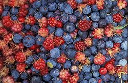 250px-alaska_wild_berries