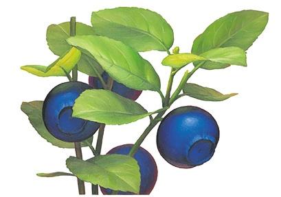 bilberry_ol