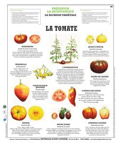 66-La-tomate